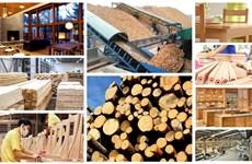 Le CPTPP offre plus d'opportunités que de défis à la filière bois