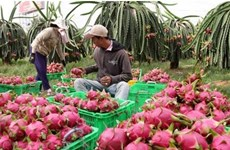 Exportations nationales de fruits et légumes de 934 millions d'USD au 1er trimestre