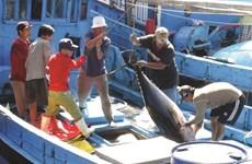 Le Vietnam est déterminé à développer la pêche durable