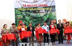 Hà Giang se dote d'une usine de thé bio équipée de technologies japonaises