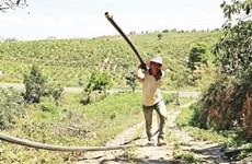 La sécheresse sévit au Tây Nguyên, les agriculteurs sur le qui-vive