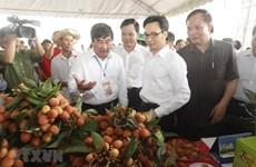 Ouverture de la toute première fête des letchis à Hai Duong