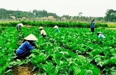Les produits du terroir favorisent le développement économique local