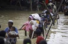 Le Myanmar et le Japon discutent de la crise des Rohingyas