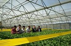 Dà Nang met le cap sur l'agriculture high-tech