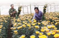 Les villages de métiers de Lâm Dông s'ouvrent aux visiteurs