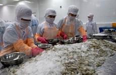 Une année difficile pour les exportations de crevettes