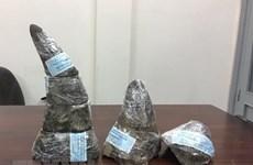 Saisie de 34 kg de cornes de rhinocéros à l'aéroport international de Noi Bai