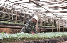 Les plantes médicinales, l'or vert de Kon Tum