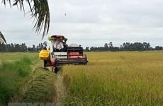 Le 3e Festival du riz du Vietnam prévu en décembre prochain