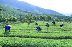 """Agriculture """"bio"""": le Vietnam peut mieux faire"""
