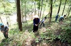Quang Nam : lancement d'un projet pour la gestion forestière durable
