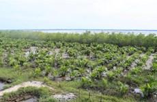Résilience aux impacts du changement climatique pour les communautés vulnérables côtières