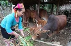 Vietnam : 6 millions de personnes ont échappé à la pauvreté