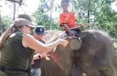 Animals Asia finance un projet de conservation des éléphants à Dak Lak
