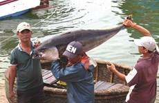 Le Vietnam se dirige vers une pêche durable