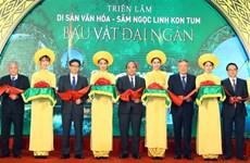 Ginseng de Ngoc Linh, un trésor national à préserver
