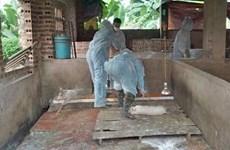 Assistance internationale à la lutte contre la peste porcine africaine au Vietnam