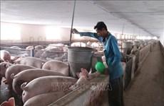 """PPA : La FAO """"ne recommande pas"""" la déclaration de l'état d'urgence"""