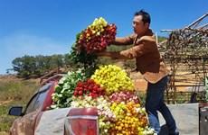 Au pied de la montagne Lang Biang, on a fait fortune grâce aux roses