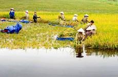Le Fonds vert pour le climat financera un projet du delta du Mékong