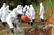 Le Cambodge signale le premier foyer de peste porcine africaine