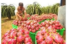 La Nouvelle-Zélande soutient le Vietnam dans les exportations de pitaya