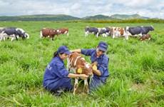 Vinamilk: fer de lance de l'industrie laitière vietnamienne