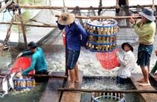 Les exportations de pangasius vietnamiens vers l'UE en forte hausse