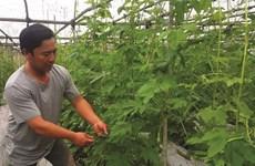 À Ninh Binh, il trace son sillon bio et s'enrichit