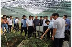 La réserve de biosphère mondiale de Nghê An abrite 1.000 plantes médicinales rares
