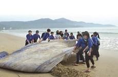 Le Vietnam s'engage à s'associer à la lutte contre les déchets marins