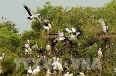Parc national Tram Chim: Projet de gestion de la forêt humide