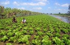 Long An: Cân Giuôc renforce sa production maraîchère sûre