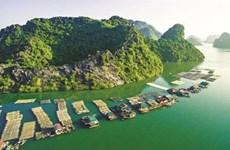 Les paysans à Ha Long s'affairent et font fortune