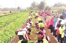 Quand les champs deviennent des classes à Dà Nang