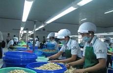 Le Vietnam exporte 47.000 tonnes de noix de cajou en août
