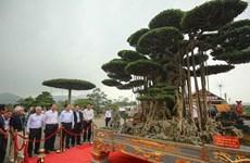 L'exposition de bonsaïs de l'Asie-Pacifique 2019 prévue en novembre à HCM-Ville