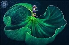 Le Vietnam remporte 26 prix au 10e concours international de photos d'art