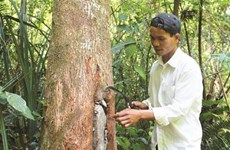 L'apiculture durable des Gie Triêng de Quang Nam