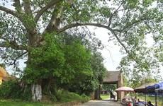 Les villageois de Duong Lâm, de l'amour pour la terre natale à l'espoir de la conserver
