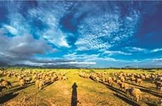 La brève histoire du mouton au Vietnam