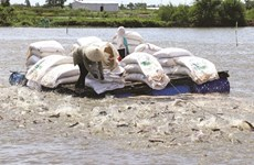 Les pangasius vietnamiens à la conquête des marchés difficiles
