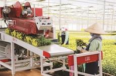 La province de Lâm Dông met le cap sur l'agriculture high-tech