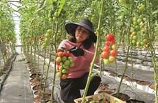 Le Tây Nguyên veille à adapter son agriculture au changement climatique