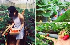 Agrotourisme en plein essor à Dà Lat