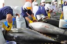 Les exportations du thon vers l'Italie augmentent de 18,7%