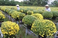 Les jardiniers du Centre souhaitent une bonne récolte pour le Têt