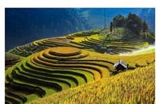 Les rizières en terrasse à Mù Cang Chai reconnues Patrimoine national spécial