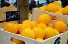 Le Vietnam, 9e plus grand importateur de fruits frais américains